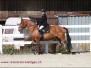 Pferdesporttag 2012